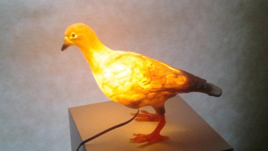 pigeonlightbest